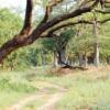 Jungle Safari at Bardia National Park