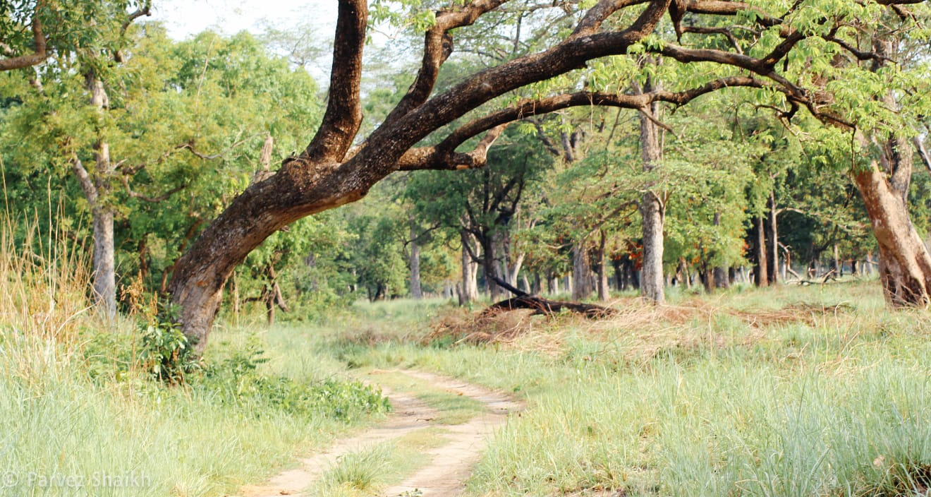 Jungle Safari at Bardia National Park
