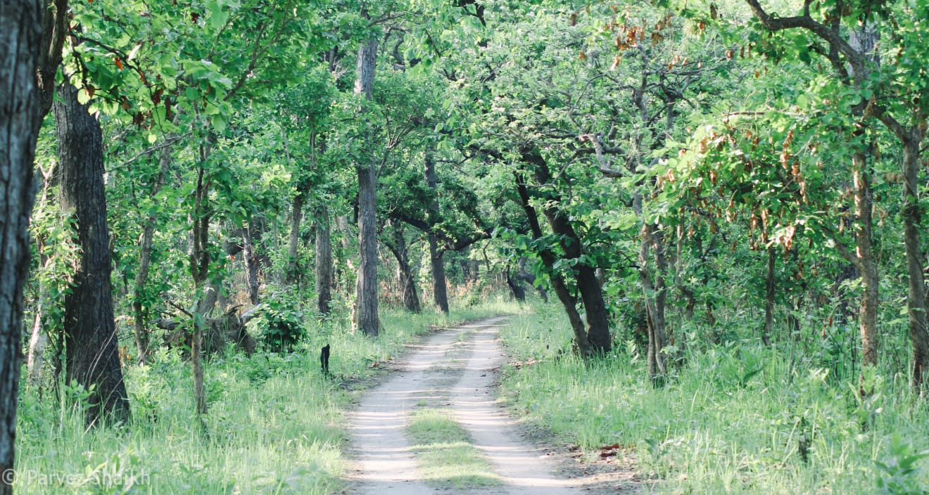 Jungle Safari at Shuklaphanta National Park, Nepal