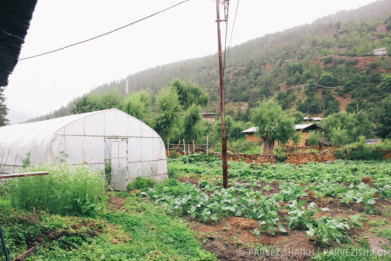 The Farm That Belongs to Tshering Farmhouse, Paro
