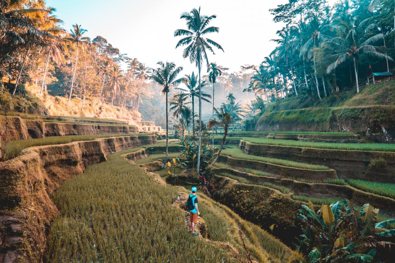 Explore Rice Paddies in Bali