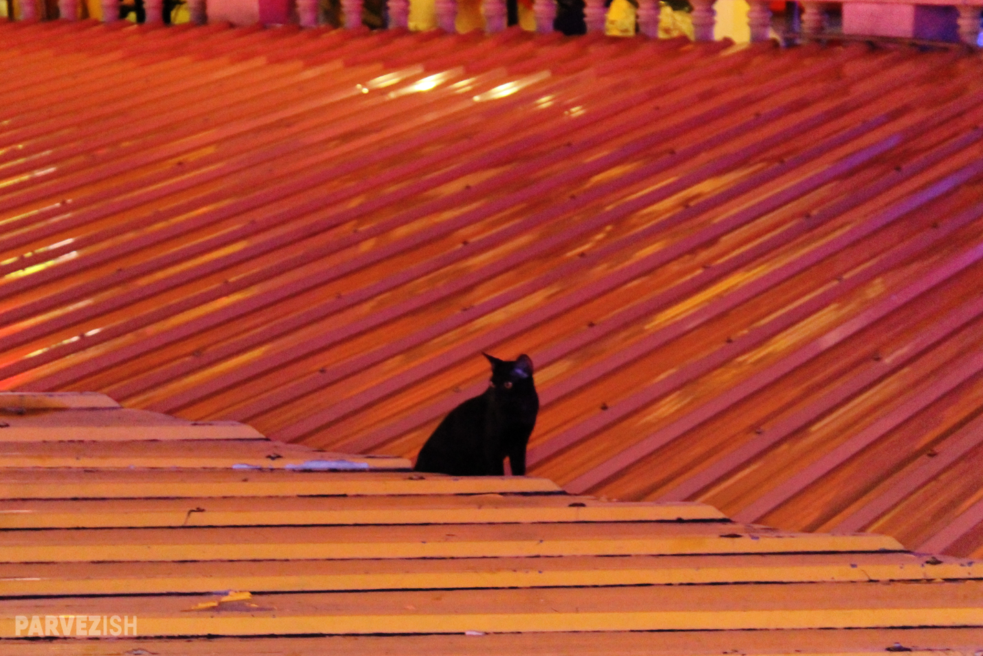 A Black Cat on a Tin Roof Somewhere in Bangkok