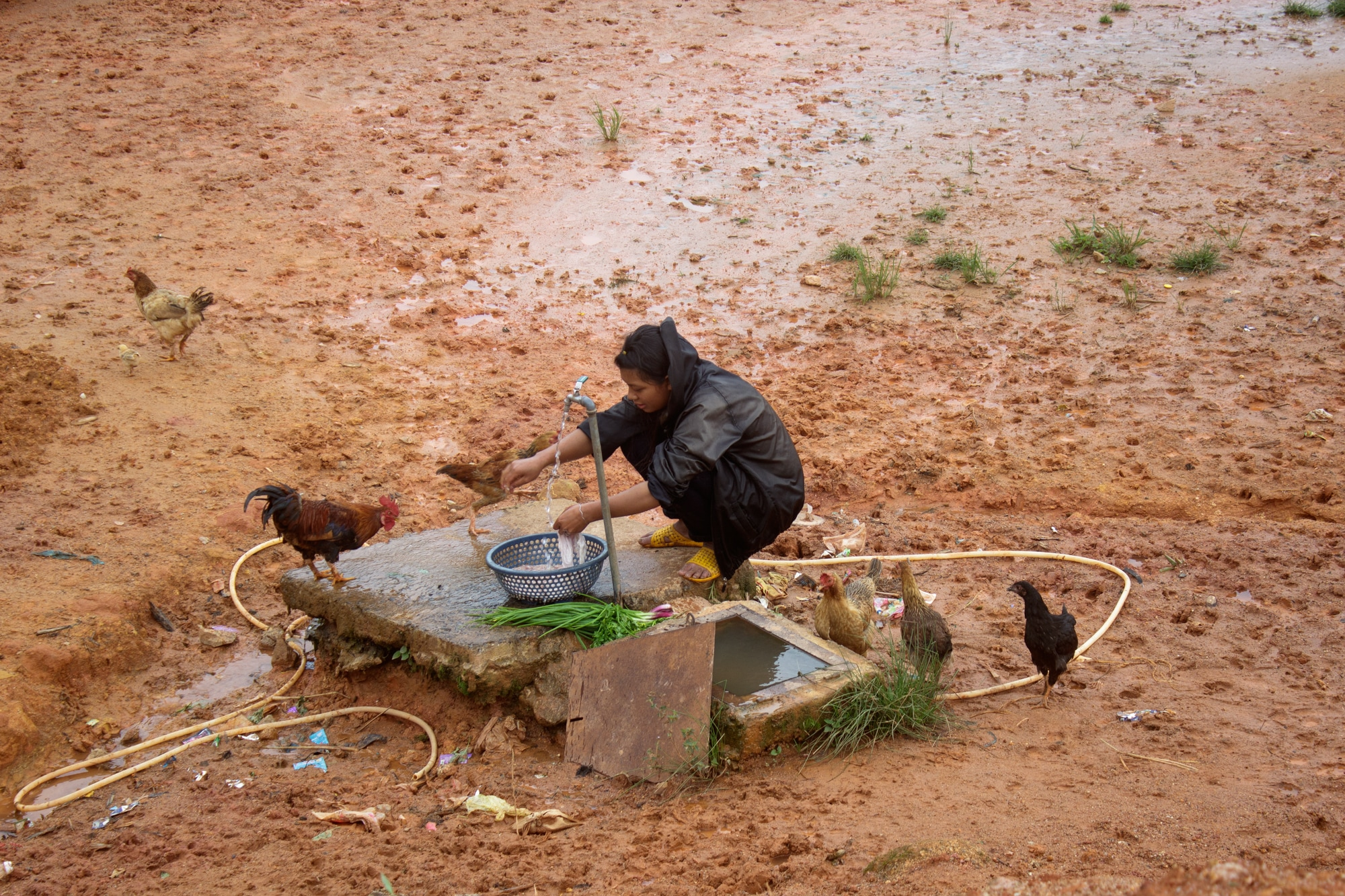 A girl washing vegetables as chickens surround her. Da Lat, Vietnam.