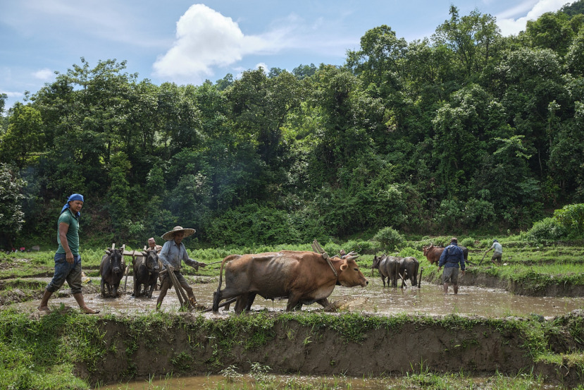 Ropain Rice Planting Festival Nepal During the Pandemic